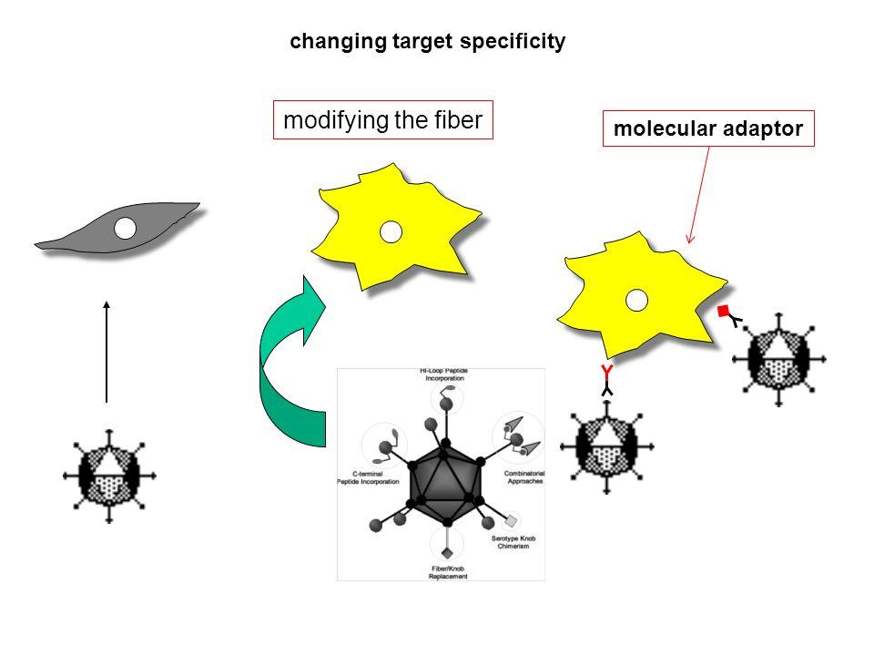 changing target specificity molecular adaptor modifying the fiber