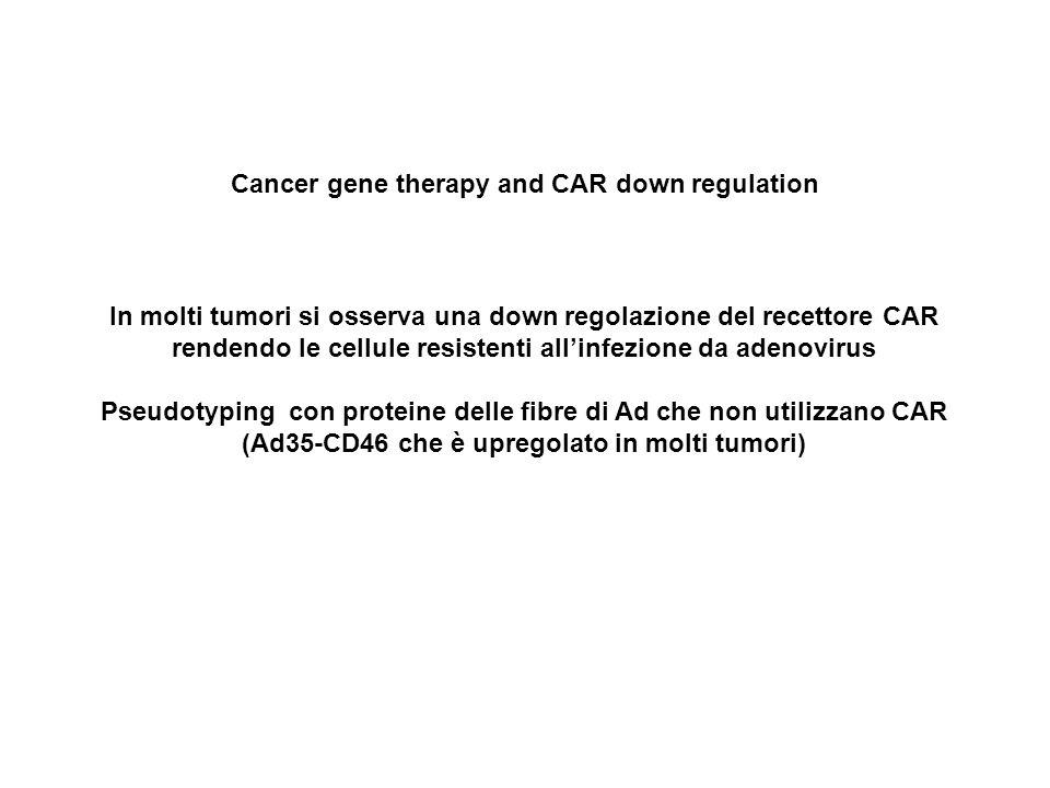 Cancer gene therapy and CAR down regulation In molti tumori si osserva una down regolazione del recettore CAR rendendo le cellule resistenti allinfezione da adenovirus Pseudotyping con proteine delle fibre di Ad che non utilizzano CAR (Ad35-CD46 che è upregolato in molti tumori)
