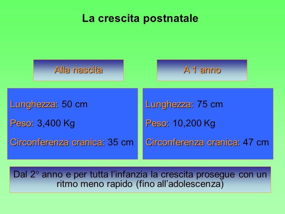 Alla nascita Lunghezza: Lunghezza: 50 cm Peso: Peso: 3,400 Kg Circonferenza cranica: Circonferenza cranica: 35 cm A 1 anno Dal 2° anno e per tutta lin