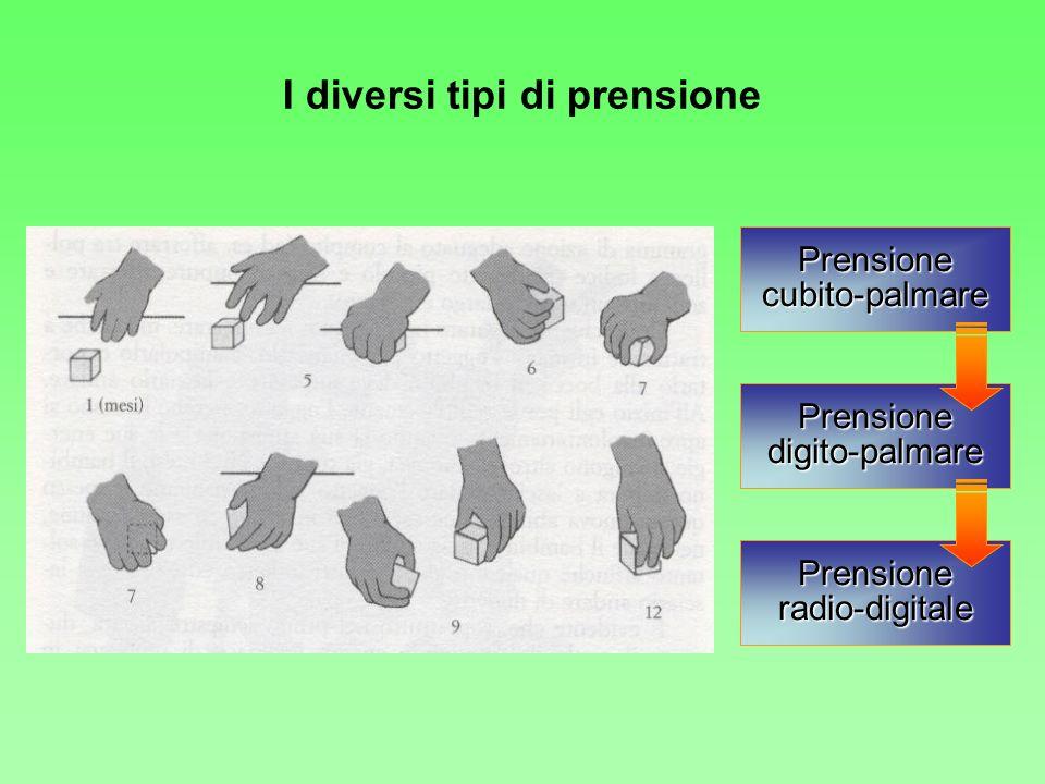 I diversi tipi di prensione Prensionecubito-palmare Prensionedigito-palmare Prensioneradio-digitale