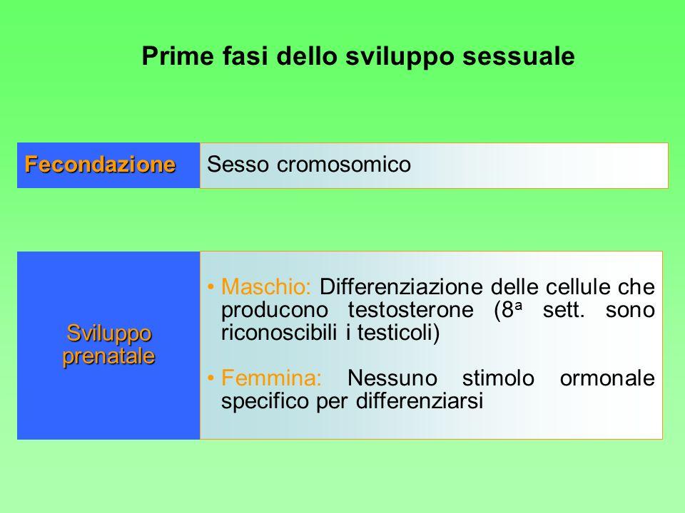 Prime fasi dello sviluppo sessuale Fecondazione Sesso cromosomico Maschio: Differenziazione delle cellule che producono testosterone (8 a sett. sono r