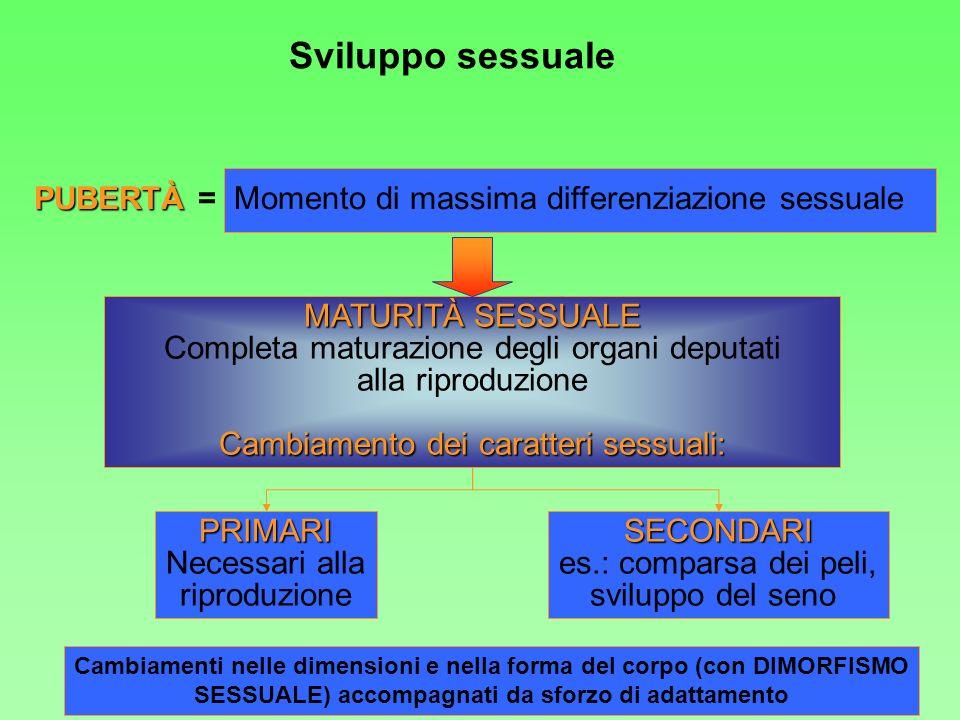 Sviluppo sessuale PUBERTÀ PUBERTÀ = Momento di massima differenziazione sessuale MATURITÀ SESSUALE Completa maturazione degli organi deputati alla rip