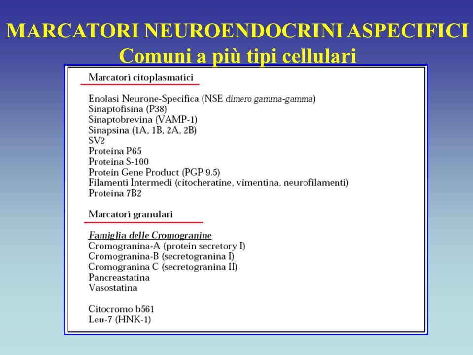 MARCATORI NEUROENDOCRINI ASPECIFICI Comuni a più tipi cellulari