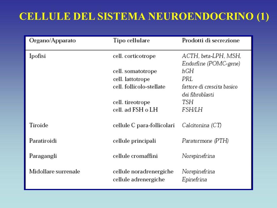 Classificazione dei carcinoidi sulla base della sede anatomica TUMORI CARCINOIDI Incidenza : 0.5-2.1 casi/100.000/anno