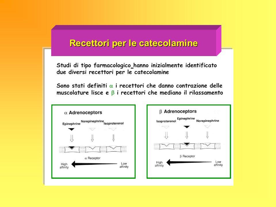 Recettori per le catecolamine