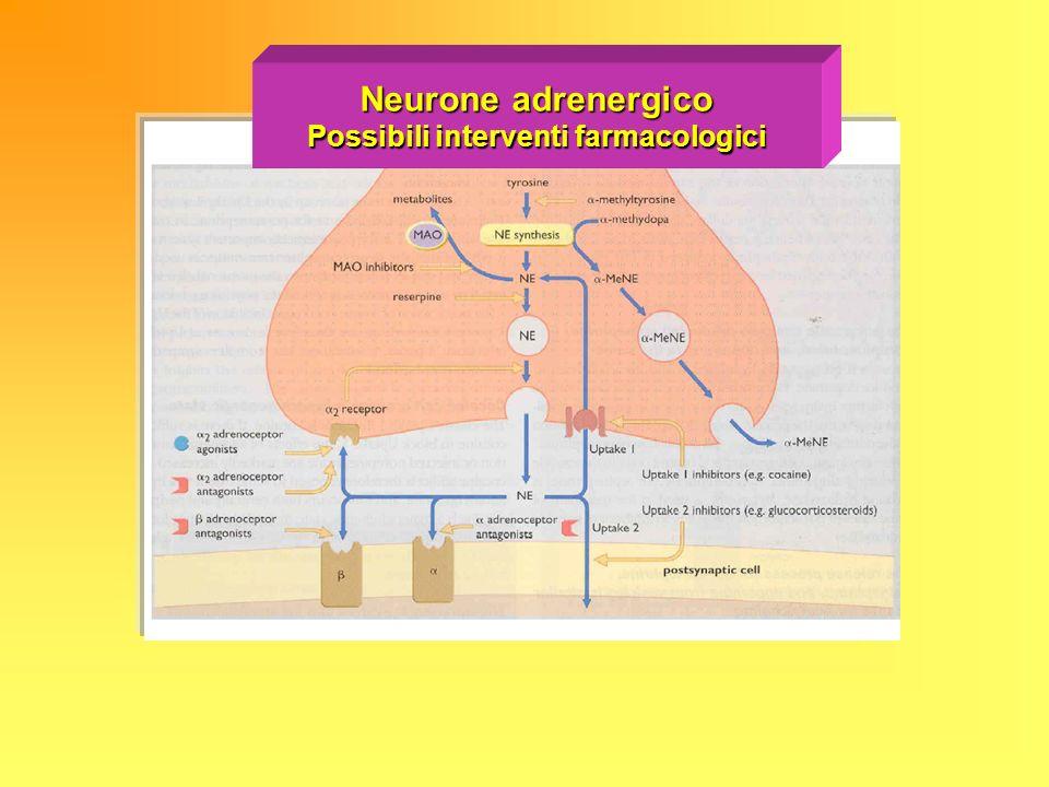Neurone adrenergico Possibili interventi farmacologici