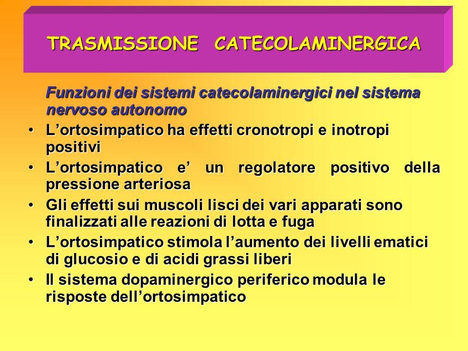 TRASMISSIONE CATECOLAMINERGICA Funzioni dei sistemi catecolaminergici nel sistema nervoso autonomo Lortosimpatico ha effetti cronotropi e inotropi pos