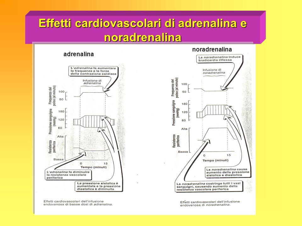 Effetti cardiovascolari di adrenalina e noradrenalina adrenalina noradrenalina