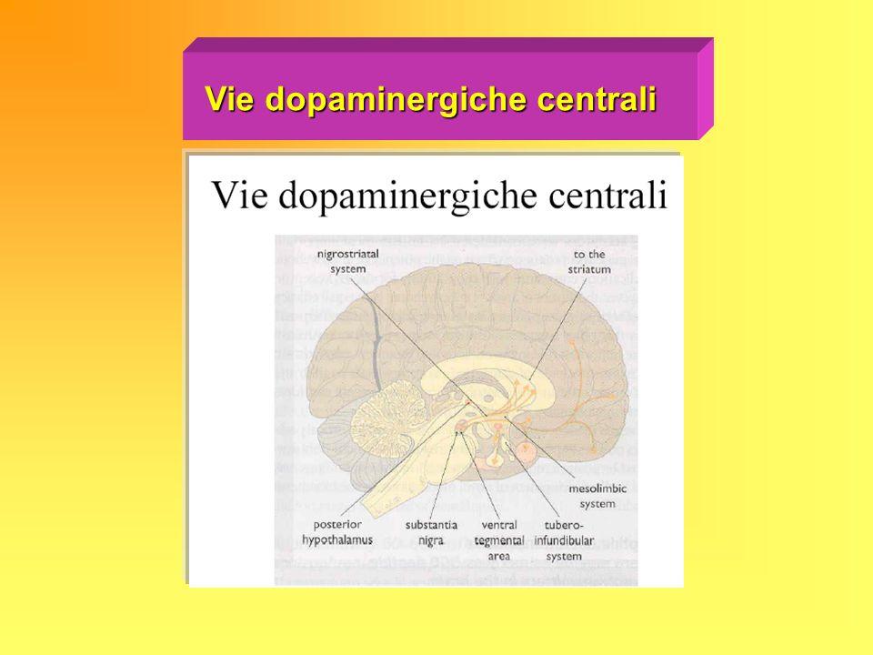 Vie dopaminergiche centrali