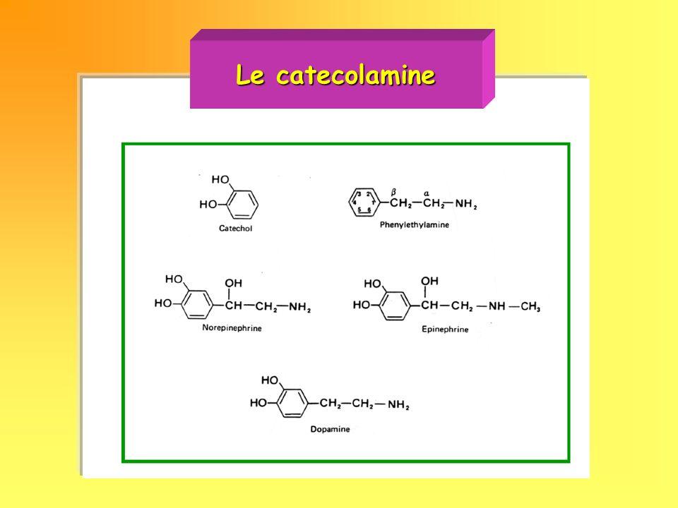 Sintesi delle catecolamine Sintesi delle catecolamine Immagazzinamento vescicolare e rilascio di catecolamine Immagazzinamento vescicolare e rilascio di catecolamine Spegnimento del segnale catecolaminergico Spegnimento del segnale catecolaminergico Le MAO e le COMT sono i principali sistemi enzimatici responsabili del catabolismo delle catecolamineLe MAO e le COMT sono i principali sistemi enzimatici responsabili del catabolismo delle catecolamine La maggior parte delle catecolamine secrete e ricatturata dal terminale sinapticoLa maggior parte delle catecolamine secrete e ricatturata dal terminale sinaptico Cocaina e antidepressivi triciclici modulano lattivita dei trasportatori per le catecolamineCocaina e antidepressivi triciclici modulano lattivita dei trasportatori per le catecolamine