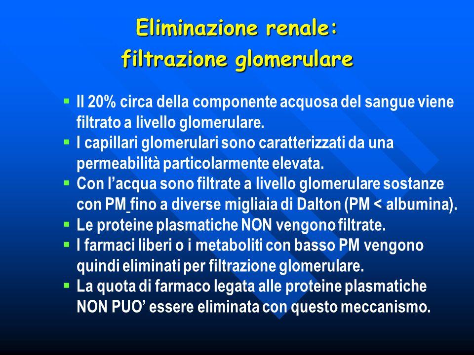 Eliminazione renale: filtrazione glomerulare Il 20% circa della componente acquosa del sangue viene filtrato a livello glomerulare. I capillari glomer