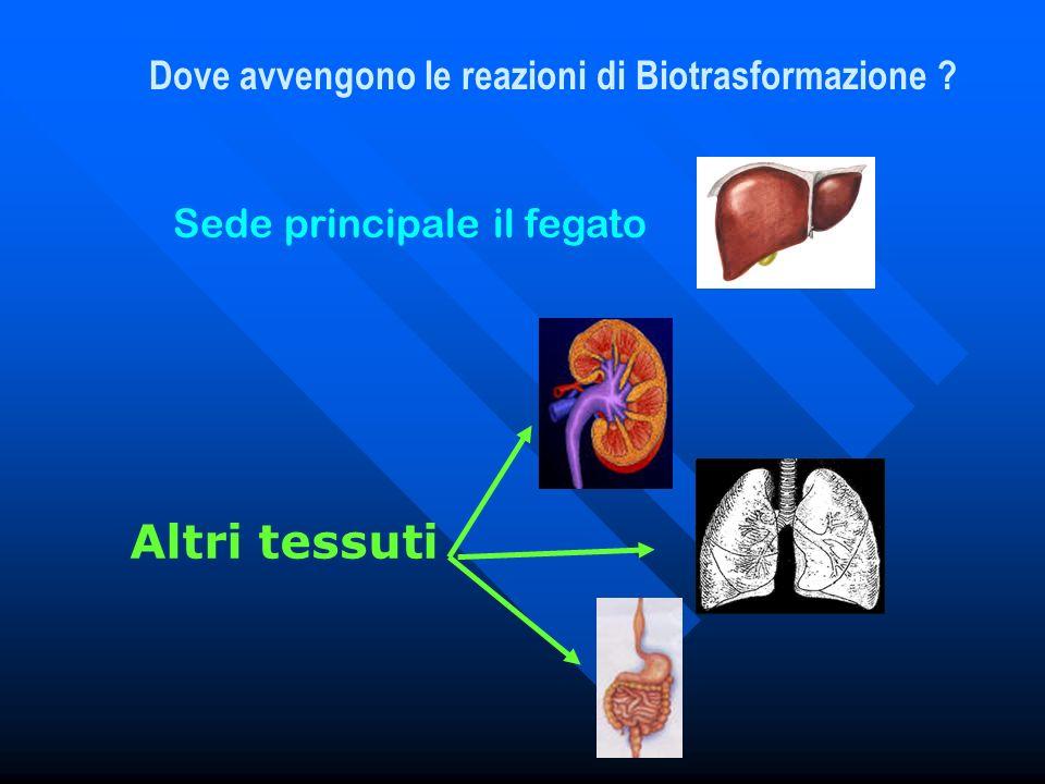 Dove avvengono le reazioni di Biotrasformazione ? Sede principale il fegato Altri tessuti