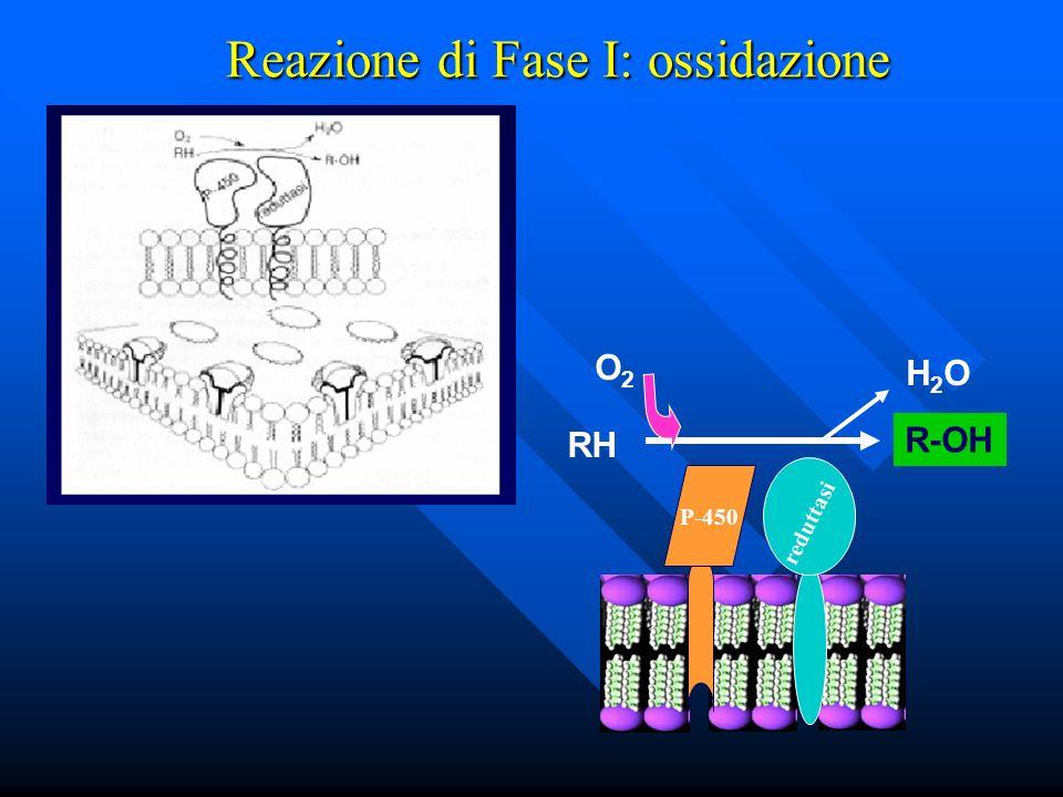 Reazione di Fase I: ossidazione P-450 reduttasi RH R-OH H2OH2O O2O2