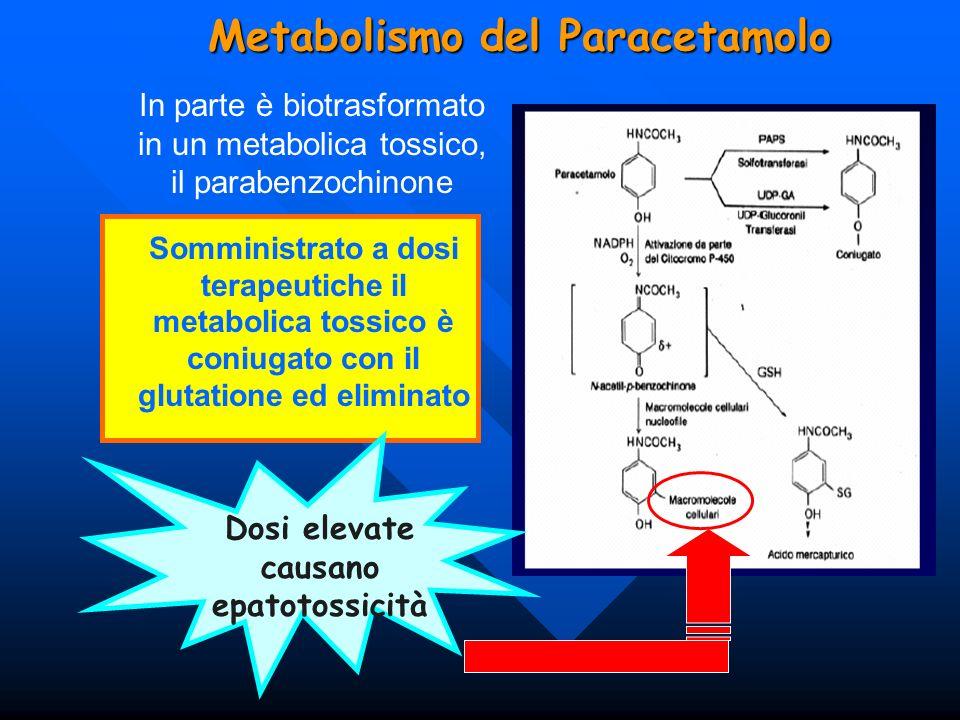 Metabolismo del Paracetamolo In parte è biotrasformato in un metabolica tossico, il parabenzochinone Somministrato a dosi terapeutiche il metabolica t