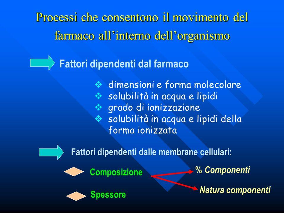 Processi che consentono il movimento del farmaco allinterno dellorganismo Fattori dipendenti dal farmaco dimensioni e forma molecolare solubilità in a