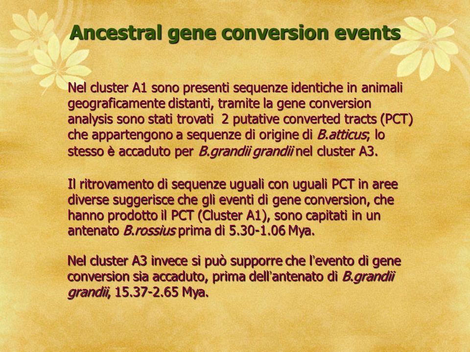 Nel cluster A1 sono presenti sequenze identiche in animali geograficamente distanti, tramite la gene conversion analysis sono stati trovati 2 putative converted tracts (PCT) che appartengono a sequenze di origine di B.atticus; lo stesso è accaduto per B.grandii grandii nel cluster A3.