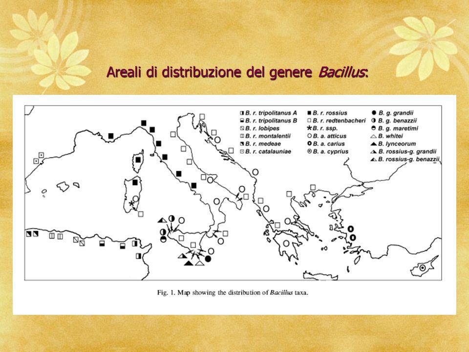 Areali di distribuzione del genere Bacillus: