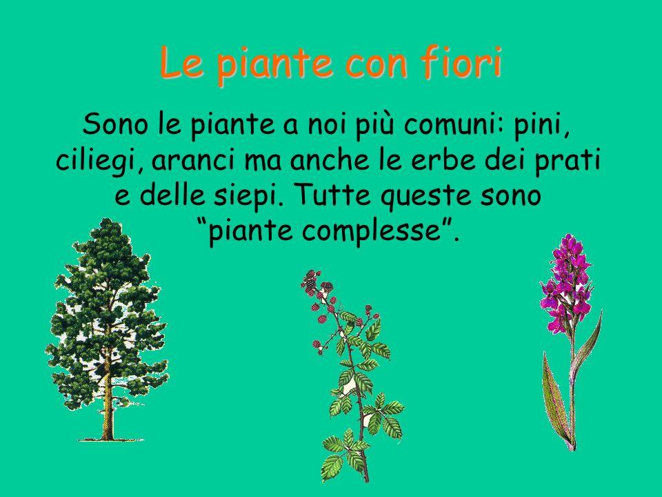 Le piante con fiori Sono le piante a noi più comuni: pini, ciliegi, aranci ma anche le erbe dei prati e delle siepi. Tutte queste sono piante compless