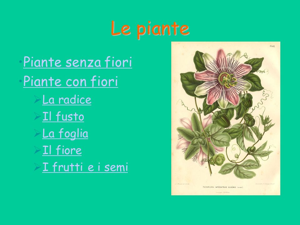 Le piante Piante senza fiori Piante con fiori La radice Il fusto La foglia Il fiore I frutti e i semi