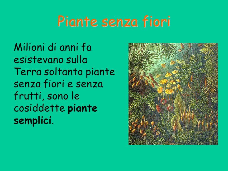 Fioritura, in particolare delle specie a rosetta Inducono la germinazione dei semi di molte dicotiledoni Inducono l allungamento degli internodi Inibiscono la formazione delle radici.