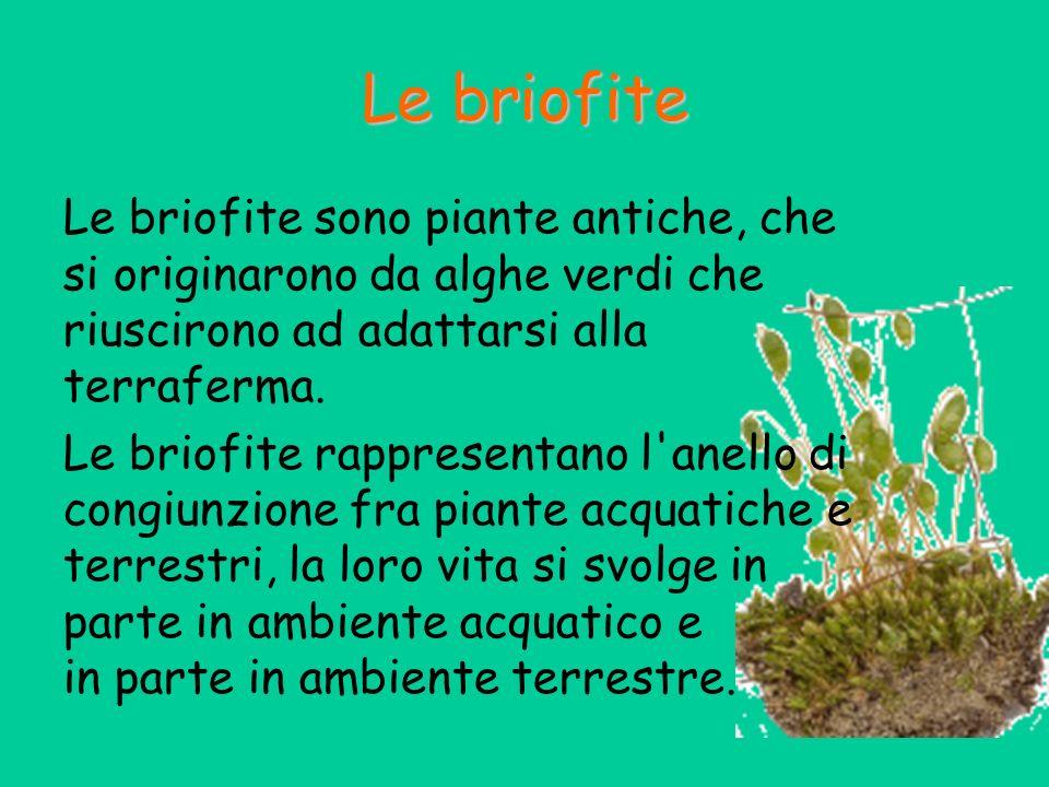 Le piante con fiori Le piante con fiori, a loro volta, si distinguono in: Gimnosperme che producono fiori ma non frutti Angiosperme che producono fiori e frutti