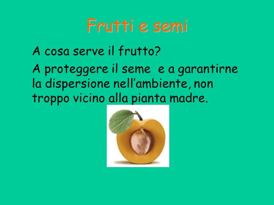 A cosa serve il frutto? A proteggere il seme e a garantirne la dispersione nellambiente, non troppo vicino alla pianta madre. Frutti e semi