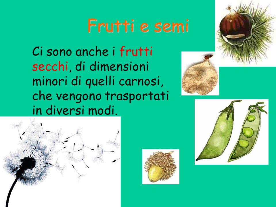 Ci sono anche i frutti secchi, di dimensioni minori di quelli carnosi, che vengono trasportati in diversi modi. Frutti e semi
