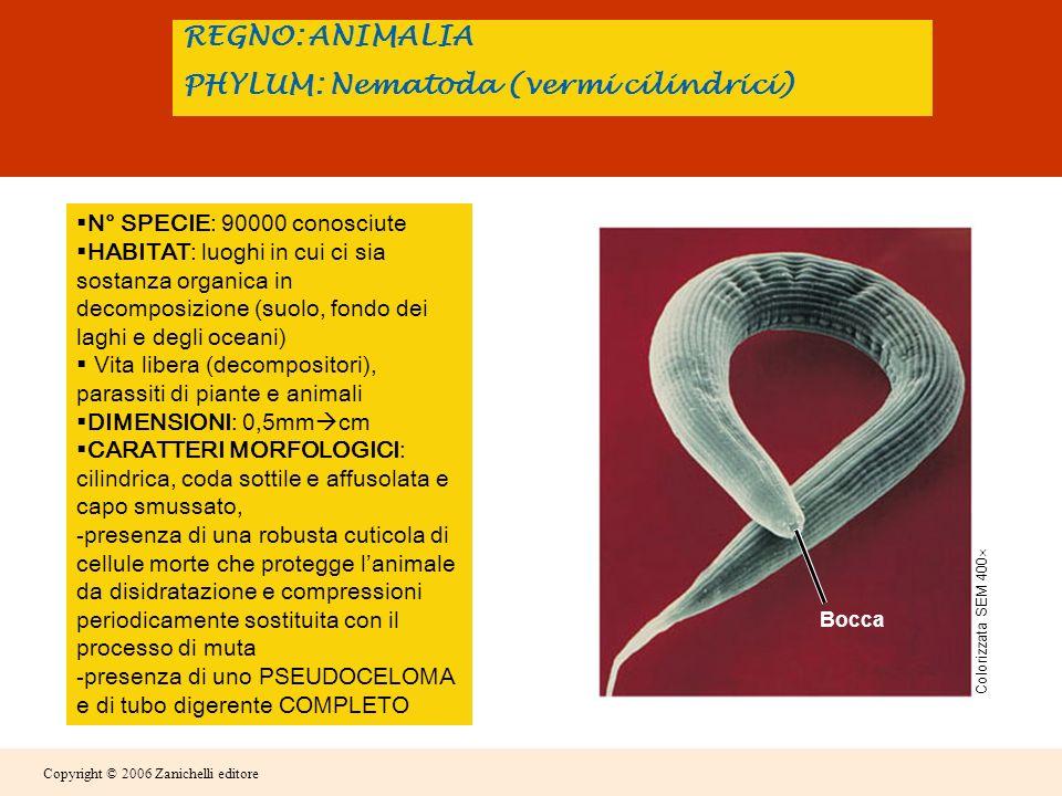 Copyright © 2006 Zanichelli editore Dalluovo si schiude una forma larvale giovanile.