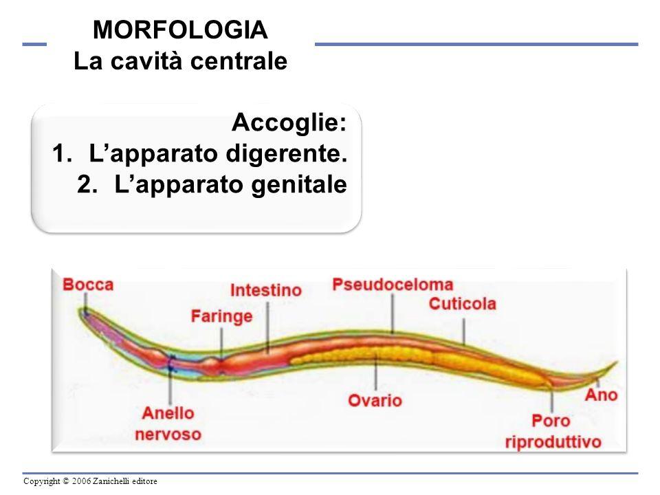 Copyright © 2006 Zanichelli editore ANATOMIA PRESENZA DI: 1.Sistema digerente.