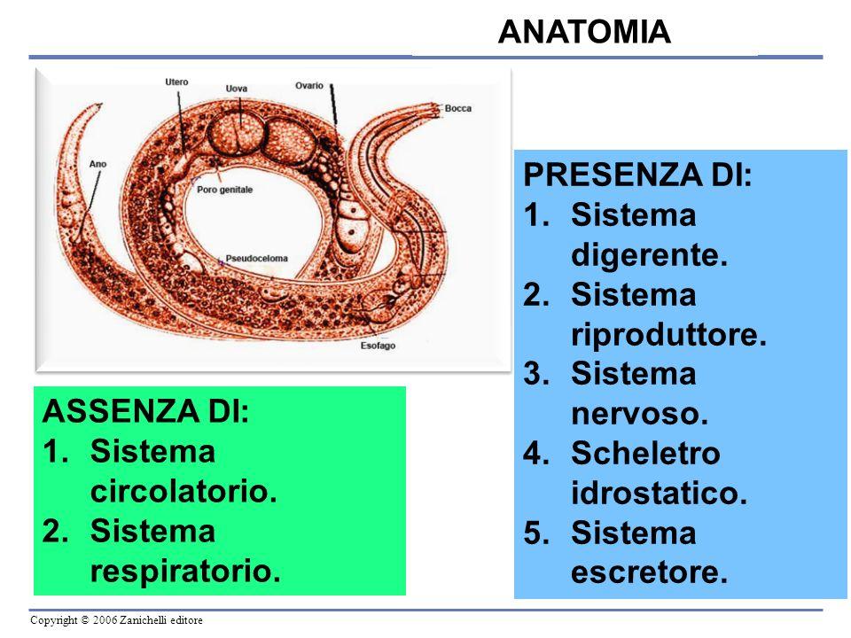 Copyright © 2006 Zanichelli editore Le specie parassite delluomo e degli animali causano numerose patologie, soprattutto in aree tropicali.