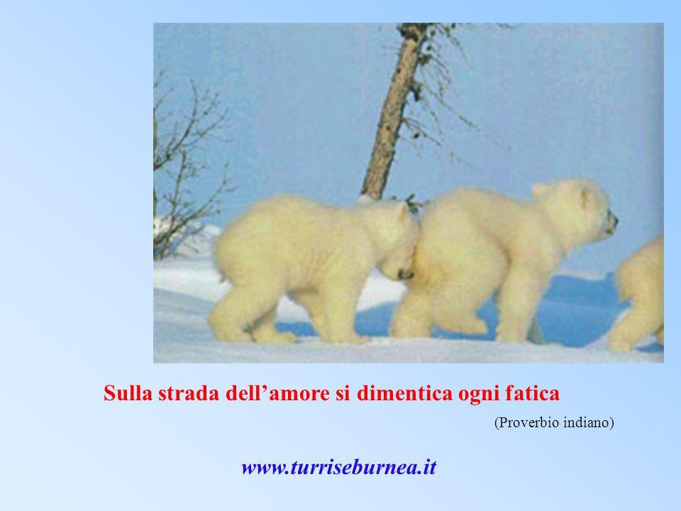 Sulla strada dellamore si dimentica ogni fatica (Proverbio indiano) www.turriseburnea.it