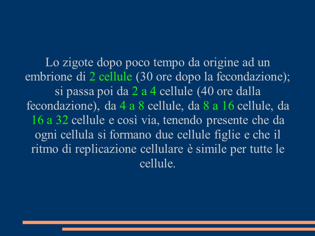 Lo zigote dopo poco tempo da origine ad un embrione di 2 cellule (30 ore dopo la fecondazione); si passa poi da 2 a 4 cellule (40 ore dalla fecondazio