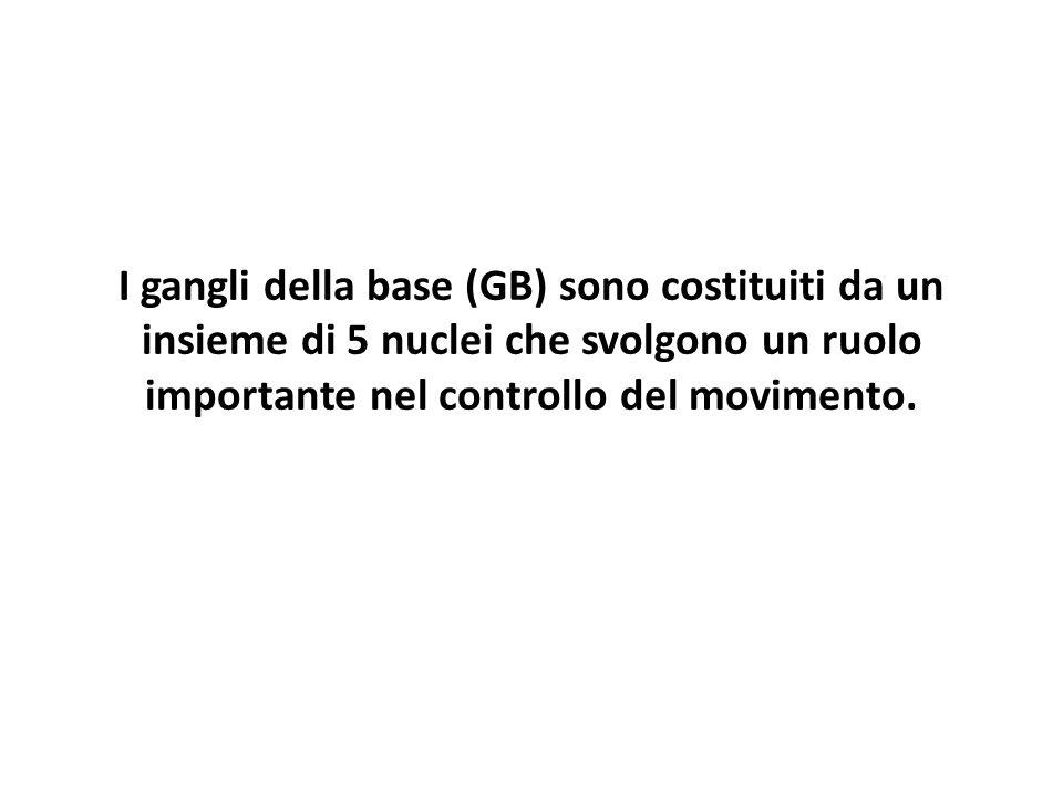 I gangli della base (GB) sono costituiti da un insieme di 5 nuclei che svolgono un ruolo importante nel controllo del movimento.