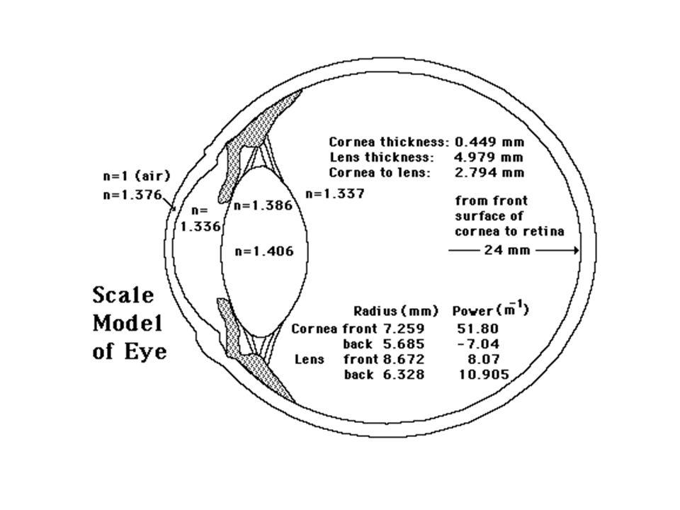 Accomodamento: regolazione focale dell occhio, generalmente spontanea, allo scopo di ottenere la massima acuità visiva a distanze diverse.