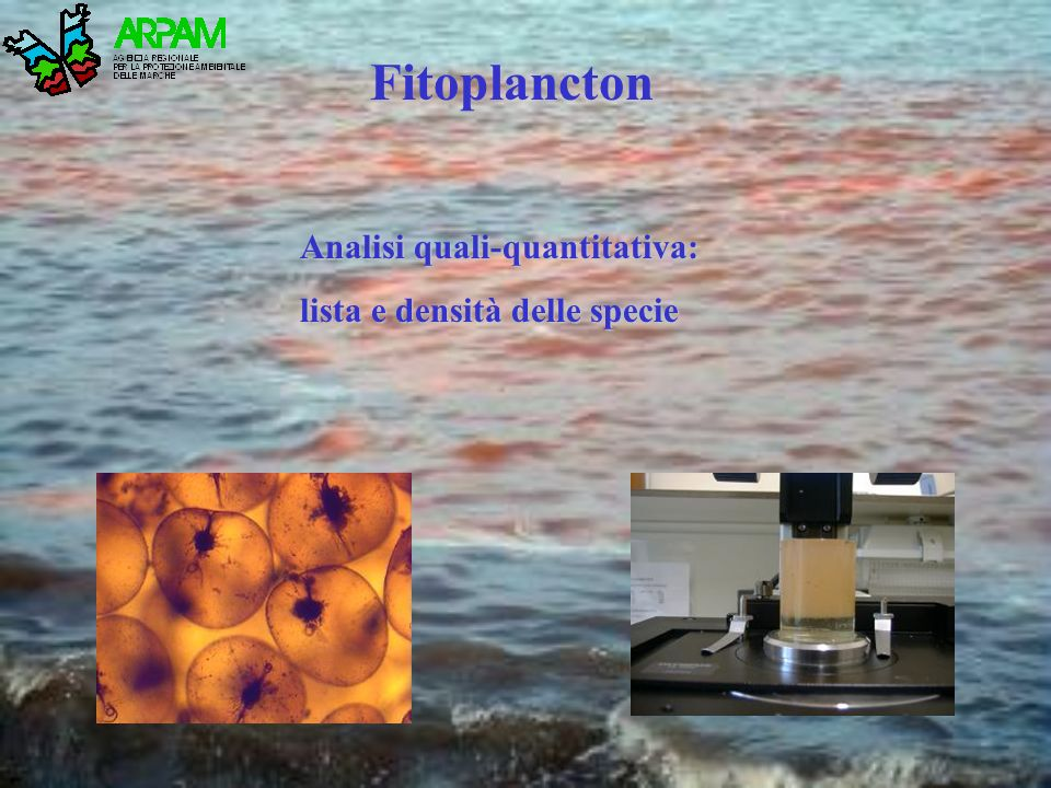 Fitoplancton Analisi quali-quantitativa: lista e densità delle specie
