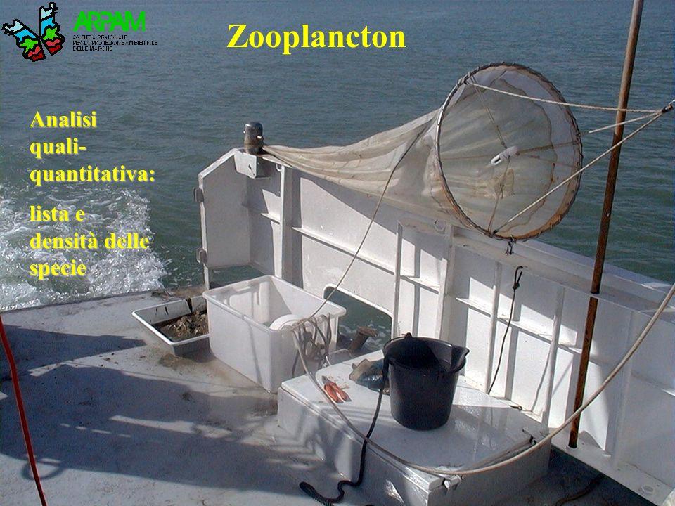 Zooplancton Analisi quali- quantitativa: lista e densità delle specie