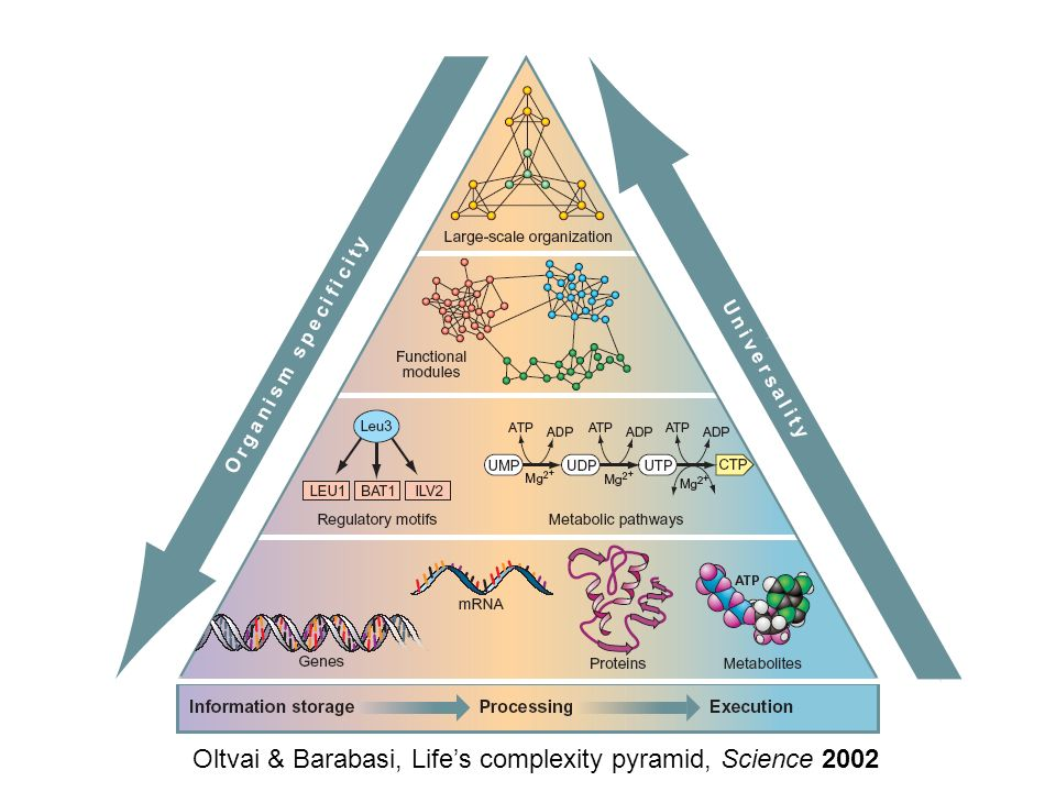 Oltvai & Barabasi, Lifes complexity pyramid, Science 2002