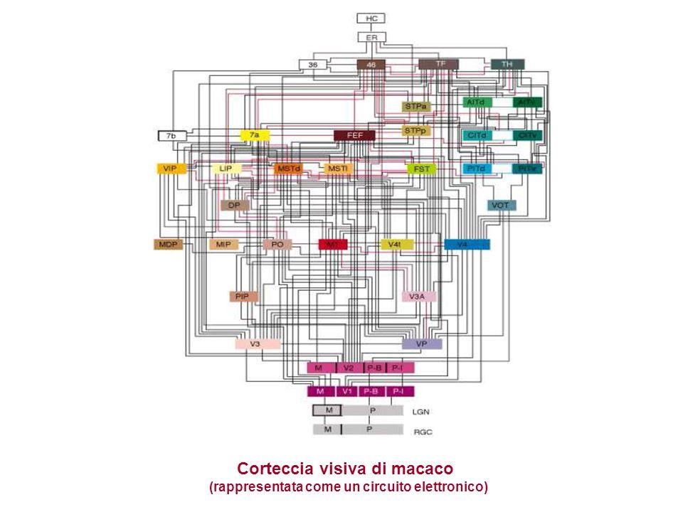 Corteccia visiva di macaco (rappresentata come un circuito elettronico)