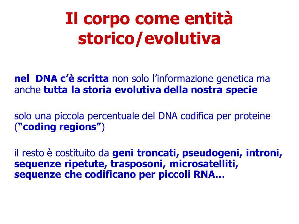 Il corpo come entità storico/evolutiva nel DNA cè scritta non solo linformazione genetica ma anche tutta la storia evolutiva della nostra specie solo una piccola percentuale del DNA codifica per proteine (coding regions) il resto è costituito da geni troncati, pseudogeni, introni, sequenze ripetute, trasposoni, microsatelliti, sequenze che codificano per piccoli RNA…