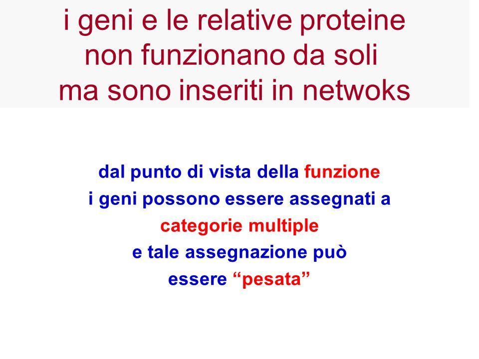 dal punto di vista della funzione i geni possono essere assegnati a categorie multiple e tale assegnazione può essere pesata i geni e le relative prot