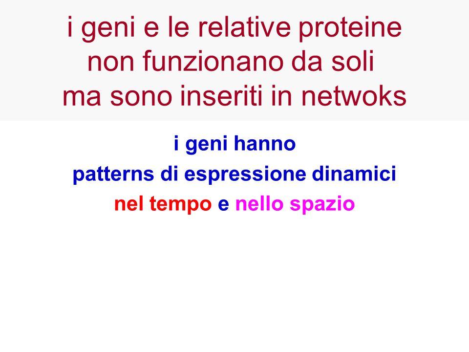 i geni hanno patterns di espressione dinamici nel tempo e nello spazio i geni e le relative proteine non funzionano da soli ma sono inseriti in netwok