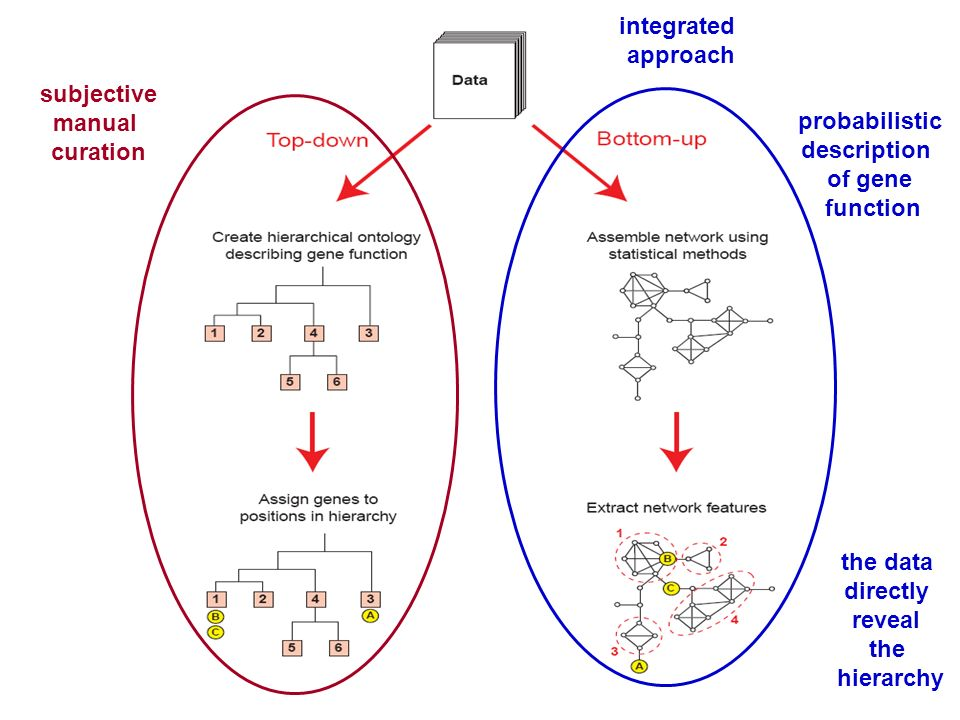 probabilistic description of gene function integrated approach the data directly reveal the hierarchy subjective manual curation