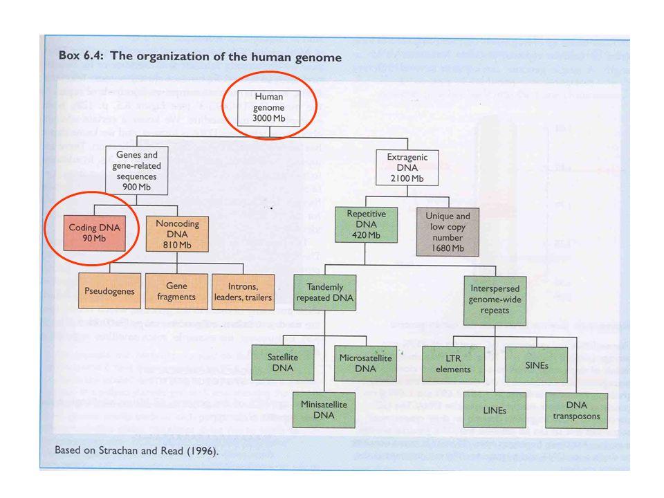 La storia evolutiva della vita sulla terra è una storia di contaminazioni genetiche orizzontali meglio rappresentata da un albero reticolato o da una rete