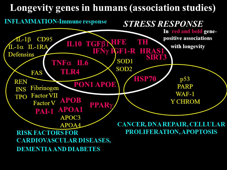 STRESS RESPONSE HFE TH IFN IGF1-R HRAS1 Fibrinogen Factor VII Factor V PAI-1 RISK FACTORS FOR CARDIOVASCULAR DISEASES, DEMENTIA AND DIABETES APOB APOA