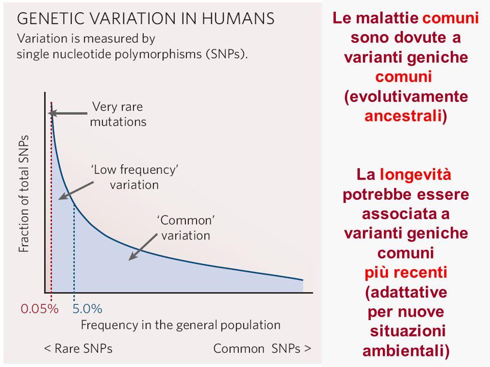 Le malattie comuni sono dovute a varianti geniche comuni (evolutivamente ancestrali) La longevità potrebbe essere associata a varianti geniche comuni