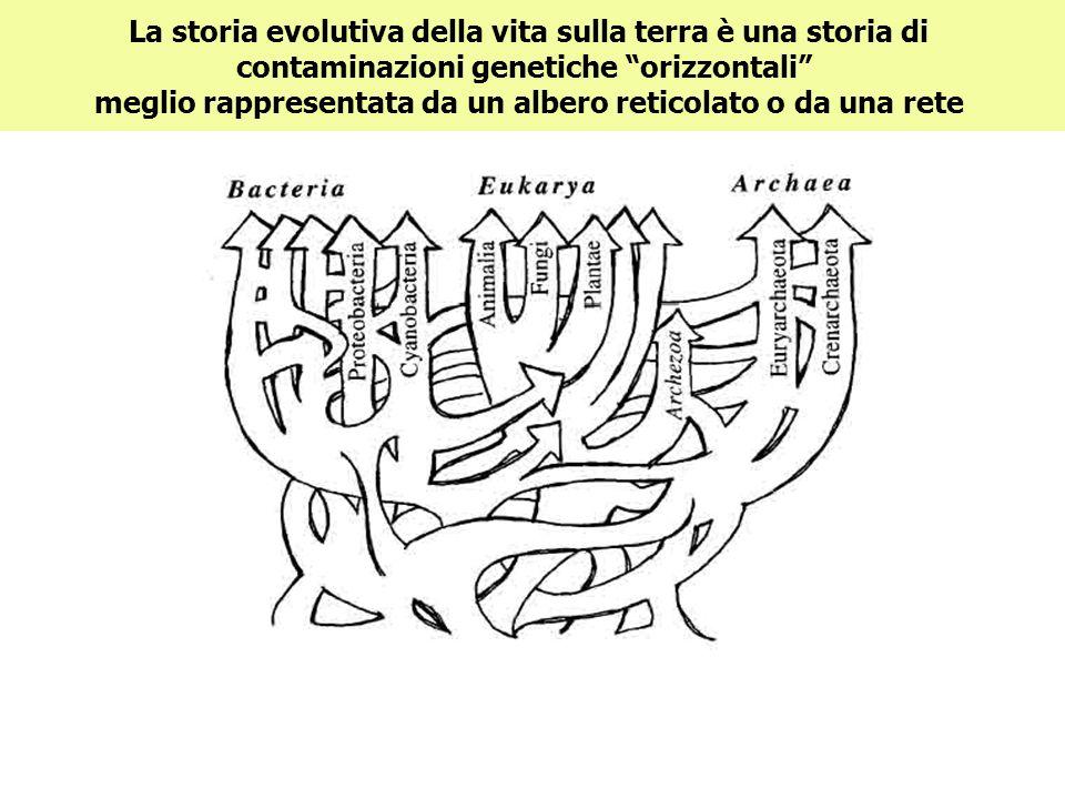 La storia evolutiva della vita sulla terra è una storia di contaminazioni genetiche orizzontali meglio rappresentata da un albero reticolato o da una