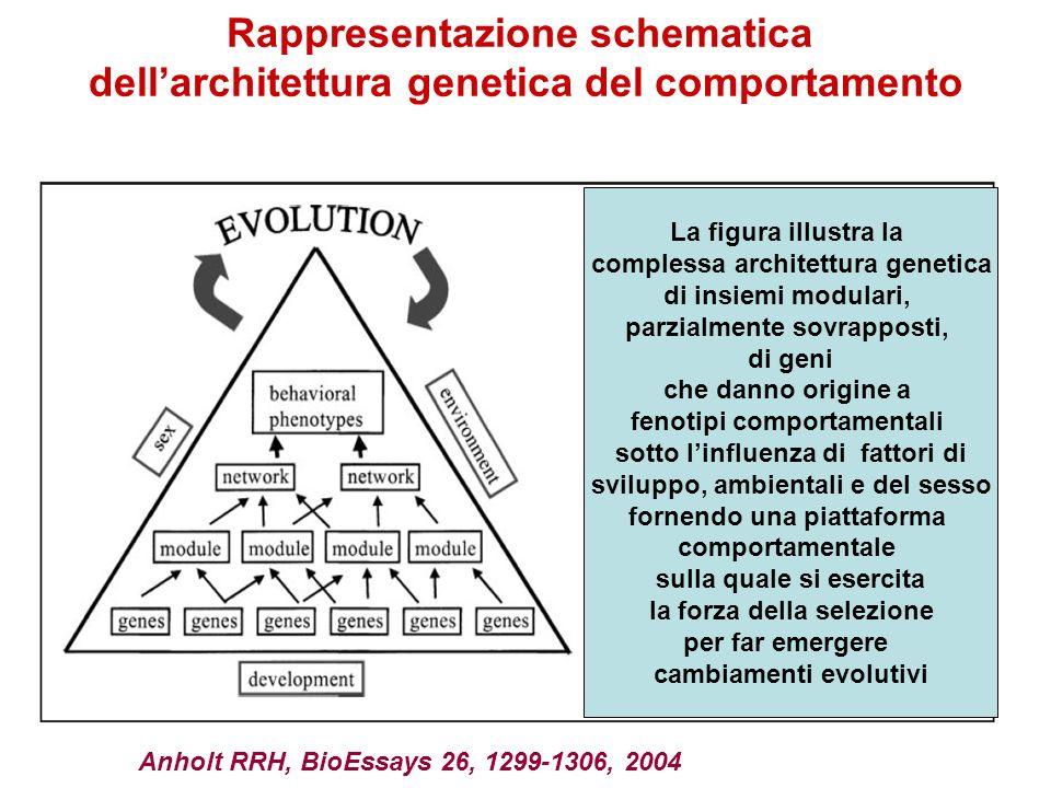 La figura illustra la complessa architettura genetica di insiemi modulari, parzialmente sovrapposti, di geni che danno origine a fenotipi comportament