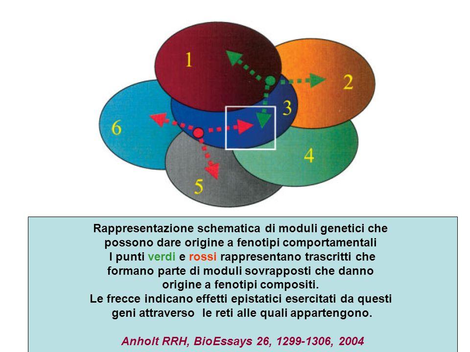 Rappresentazione schematica di moduli genetici che possono dare origine a fenotipi comportamentali I punti verdi e rossi rappresentano trascritti che