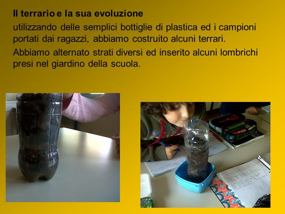 Il terrario e la sua evoluzione utilizzando delle semplici bottiglie di plastica ed i campioni portati dai ragazzi, abbiamo costruito alcuni terrari.