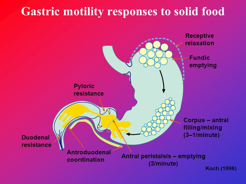 Gastric motility responses to solid food Receptive relaxation Fundic emptying Corpus – antral filling/mixing (3–1/minute) Antral peristalsis – emptyin